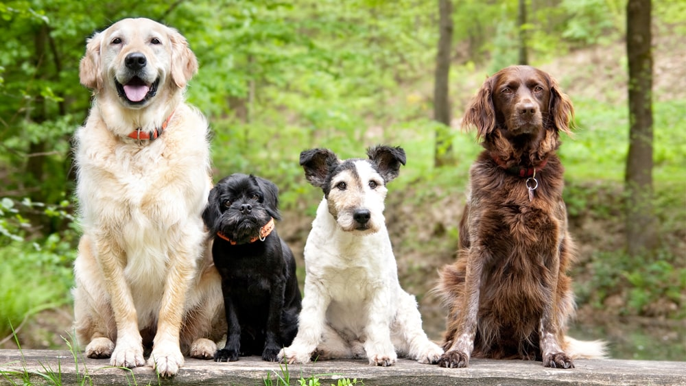 Four type of dogs sitting in the forest