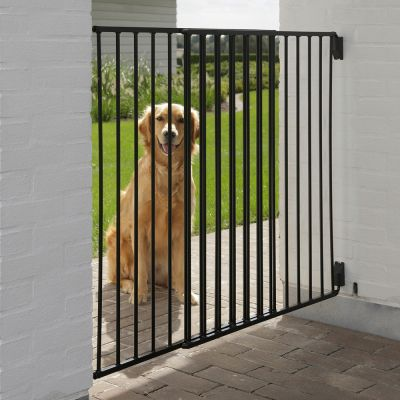 golden retriever staying at front the dog barrier in a house garden