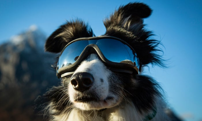 dog protecting from the sun in the mountains