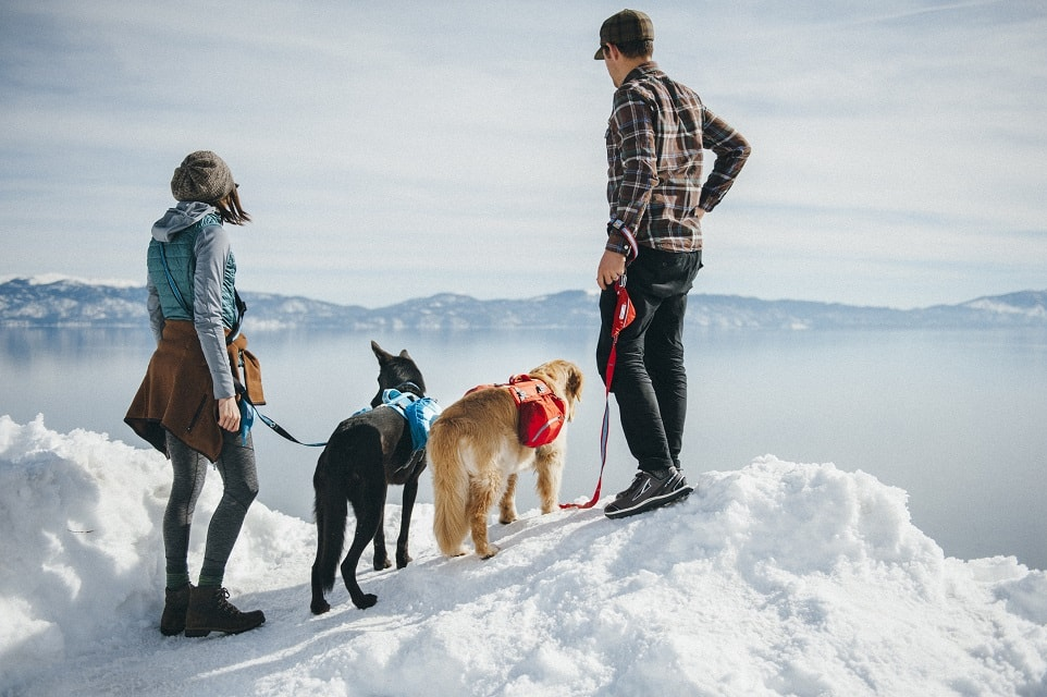 Two people with two dogs at the peak of a mountain